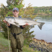 28 lb Striper at cape cod canal