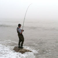 fighting a striper at dories cove